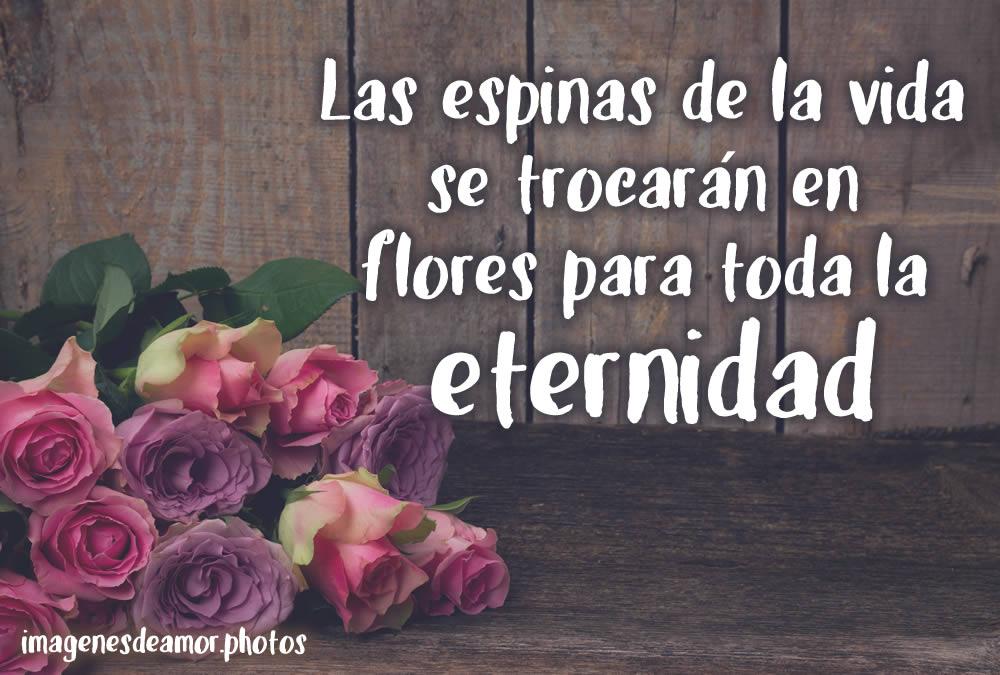 Imágenes De Flores Fotos De Rosas Con Frases De Amor