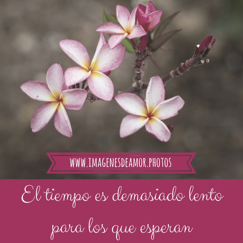 Imagenes De Flores Fotos De Rosas Con Frases De Amor