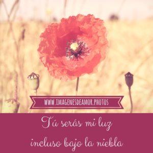 imágenes de flores con frases