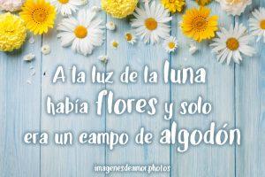imágenes de flores de amor