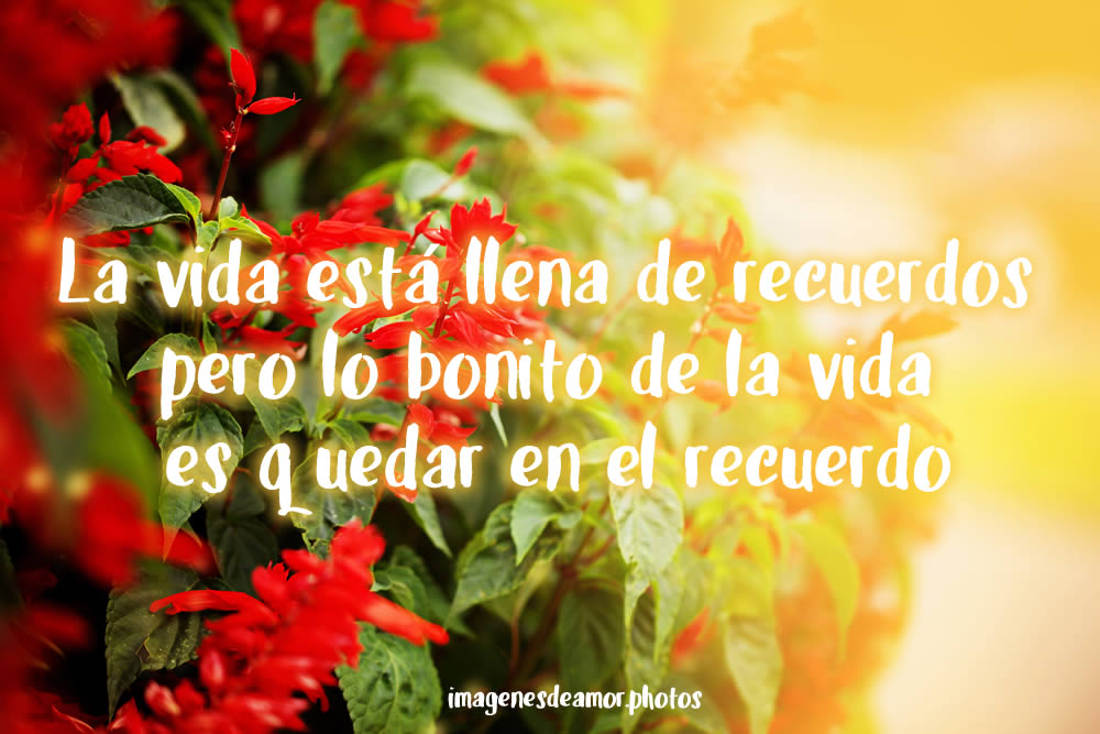 Frases Sobre La Soledad Del Alma besides Sirenas Colorear Pintar furthermore Frases Con Imagenes Divertidas Para Tu Novio together with Frases Con Imagenes Divertidas Para  partir En Facebook furthermore 3 Frases De Amor De Matrimonio   Pe T13680. on buenos dias amor