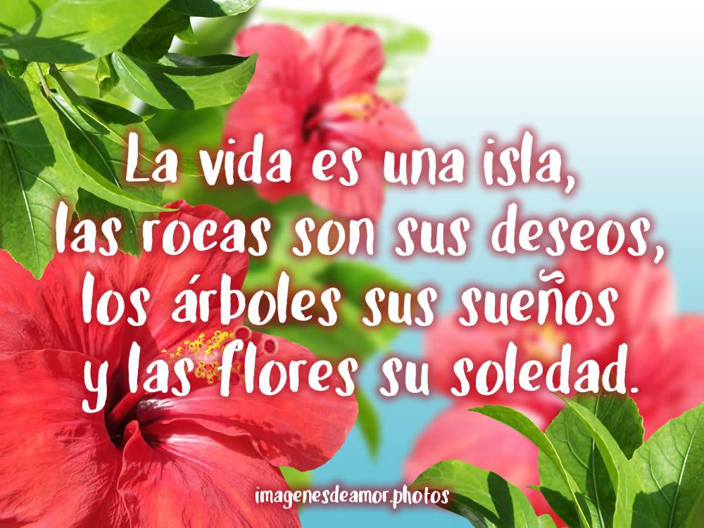 Imagenes De Rosas Con Frases De Amor Sokolvineyard Com